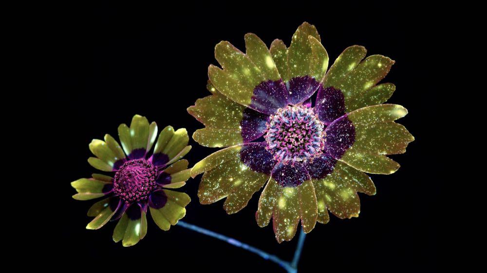 macOS Mojave Flower 3