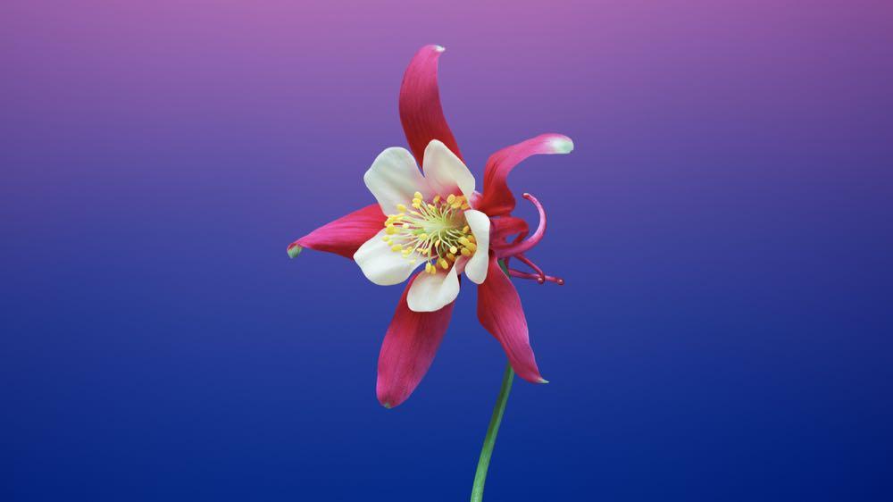 macOS Mojave Flower 6