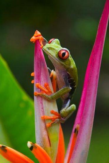 frog wallpaper ios