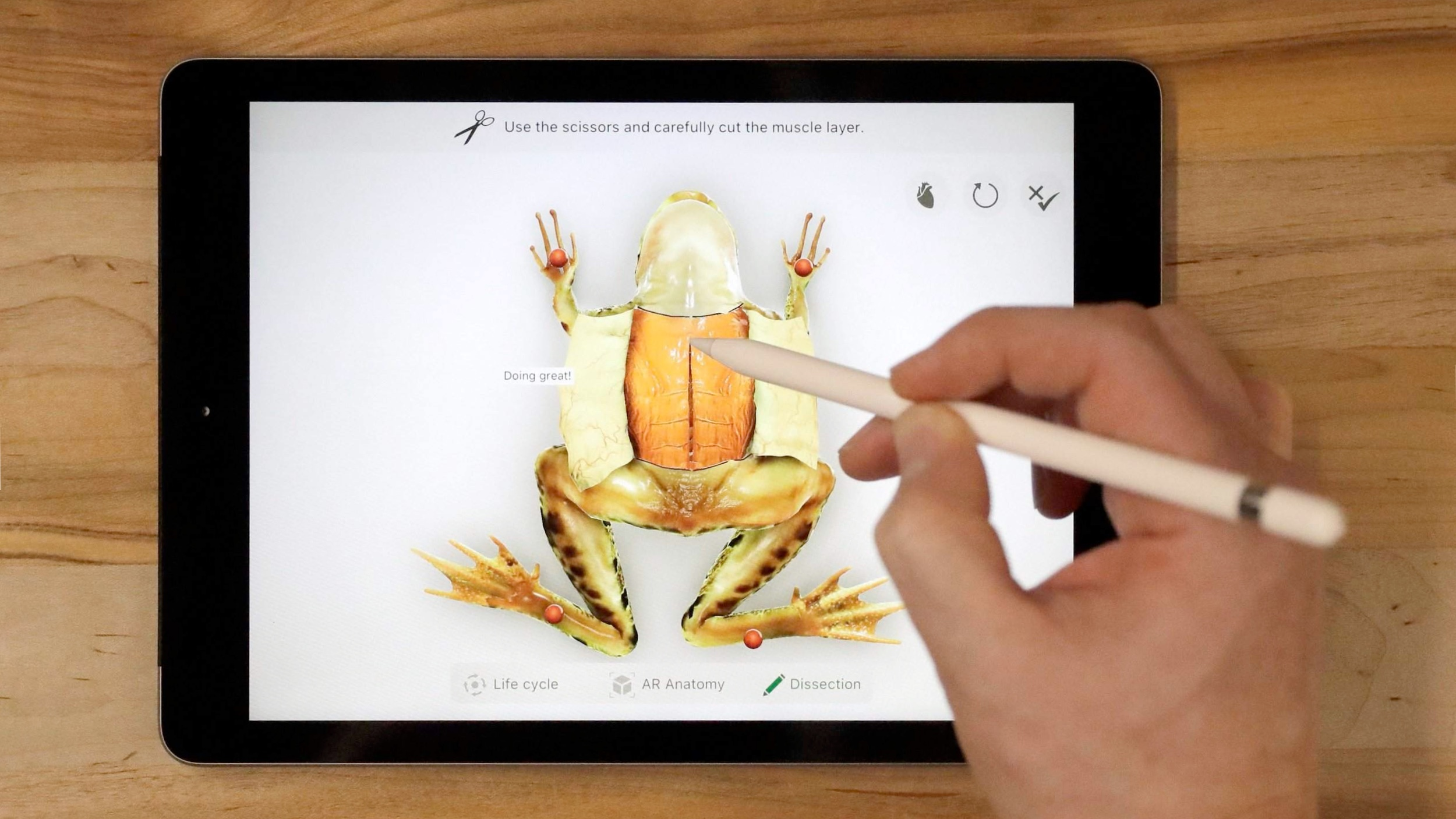 Froggipedia iPad 16x9
