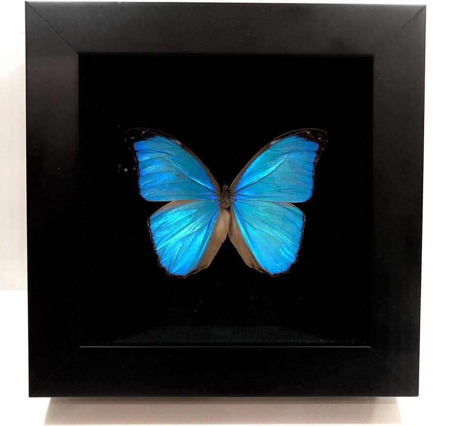 Eén van de vlinders die voor de Motion-wijzerplaat zijn gebruikt