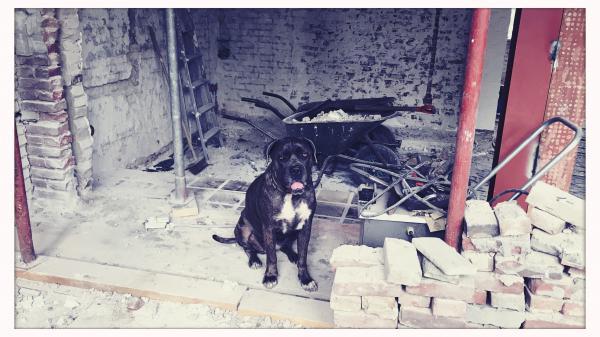 De baas op de bouwplaats