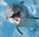 Profielfoto van Flipper01