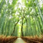 Profielfoto van Bamboe81